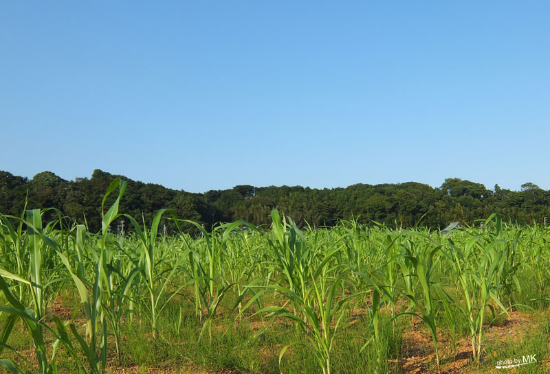 食と農の新しいテーマパーク「EdiblePark茅ヶ崎」