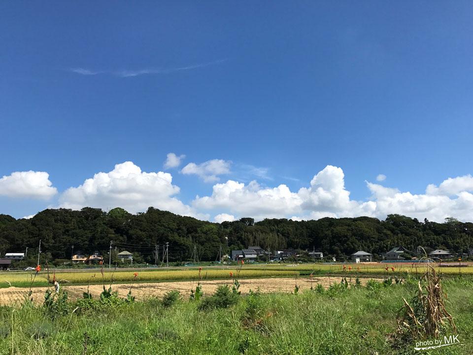 EdiblePark茅ヶ崎からの眺め