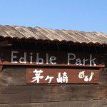 食と農を合言葉につながるコミュニティ「EdiblePark茅ヶ崎」の活動を紹介します!
